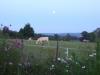 avond met maan